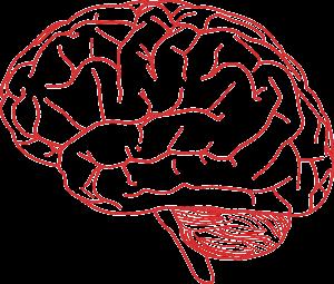 brain-155655_1280